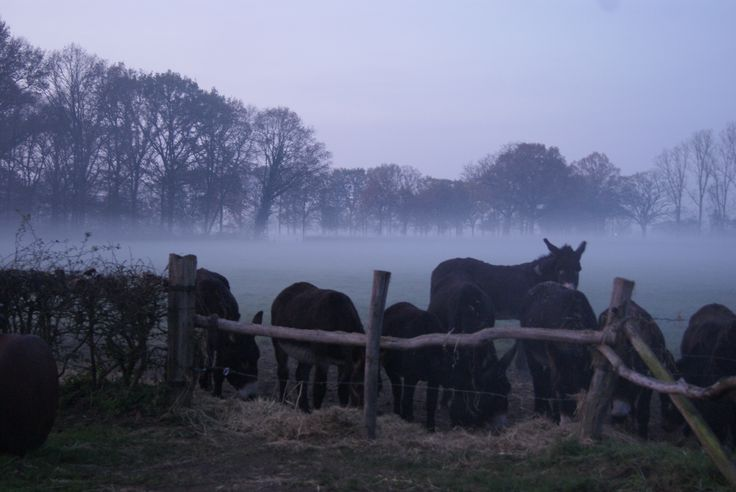 Misty donkey