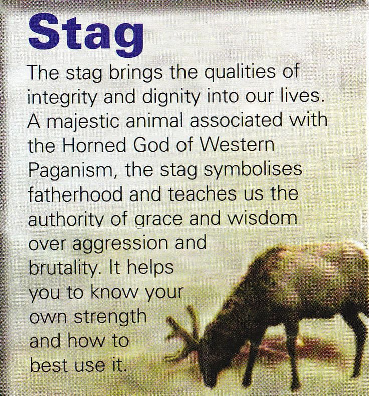 Stag spiritual guide Love this one ♡ so powerful and so regal as well as elegant and strong ♡