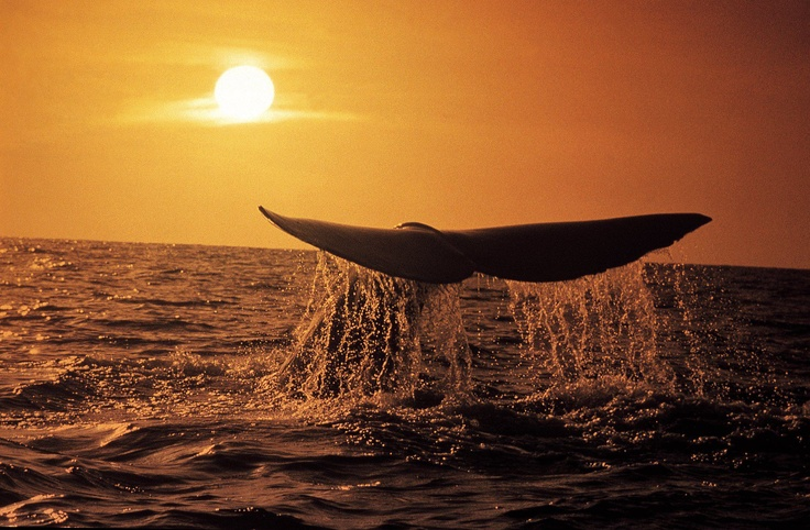 Whale season in South Africa