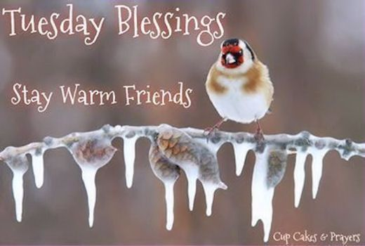 Tuesday Blessings Stay Warm Cold Tuesday Tuesday Quotes