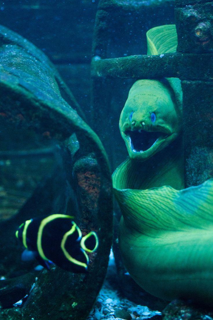 17 Best Images About Aquariums On Pinterest Starfish