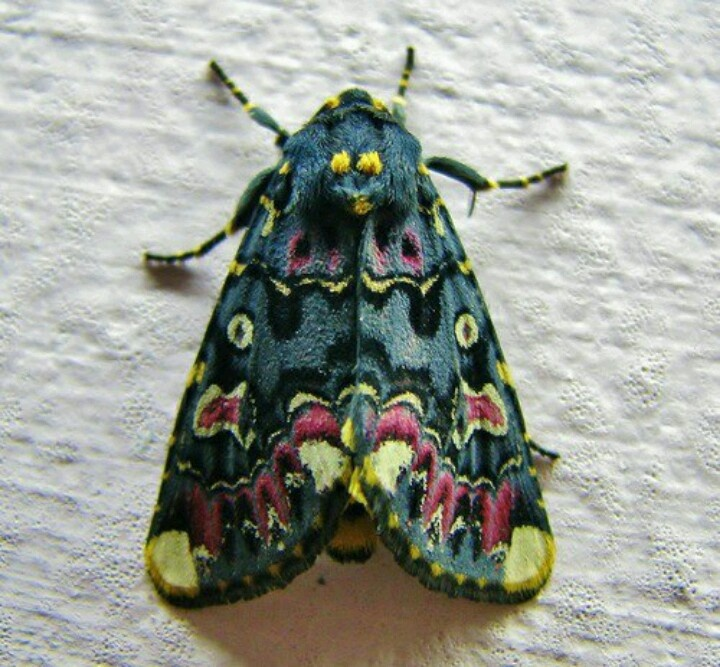 Beautiful moth