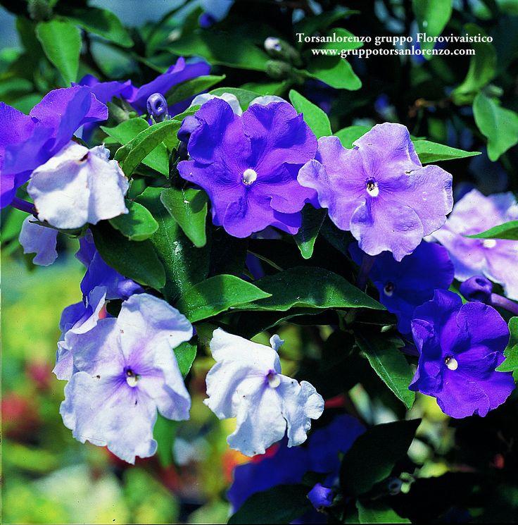 #Flower #Beautiful #Nature #Garden