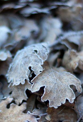 ~Autumn~ The last leaves . . .