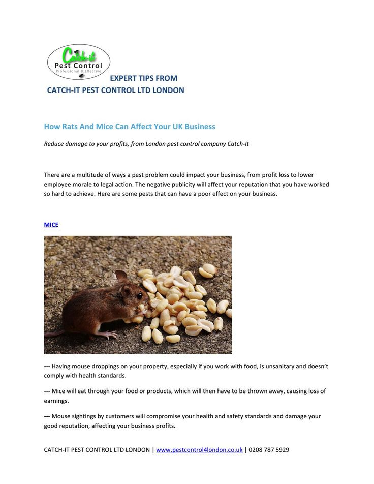http://www.pestcontrol4london.co.uk/mouse-pest-mice-control-london.html  How Rats And Mice Can Affect Your UK Business