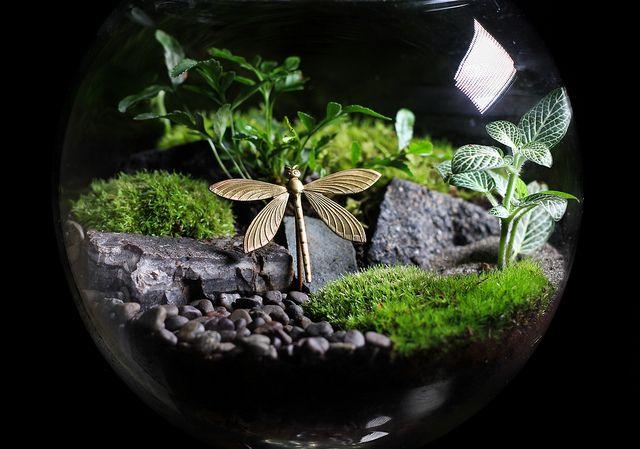 Terrarium Plants for Sale   Custom terrarium with brass dragonfly