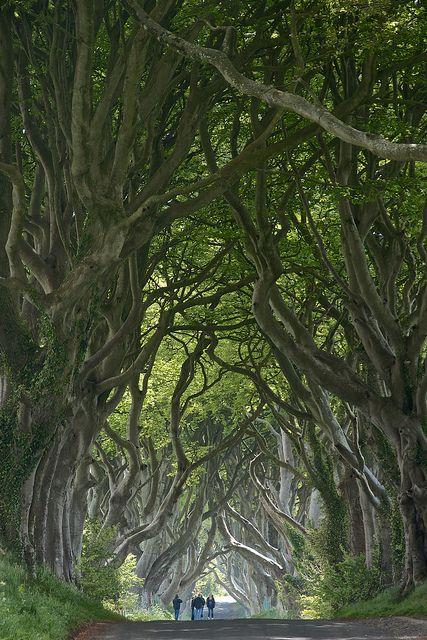 The Dark Hedges, Northern Ireland: