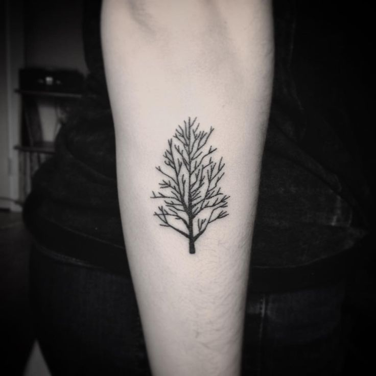 """Cute little pear tree for Madeline! Thanks again!"""