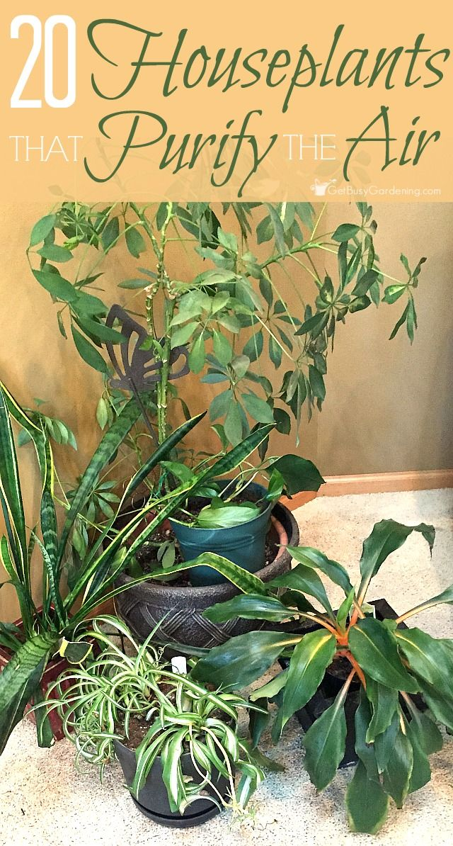 227 best houseplants images on pinterest balcony container garden and flowers