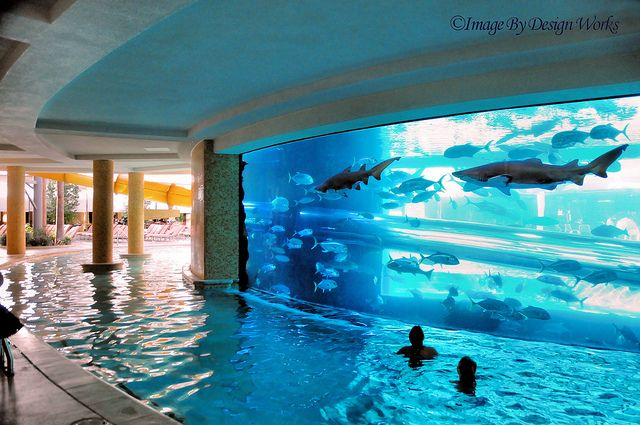 definitely a must!  at the Golden Nugget in Las Vegas  - a slide going through an aquarium with fish, stingrays, sharks..