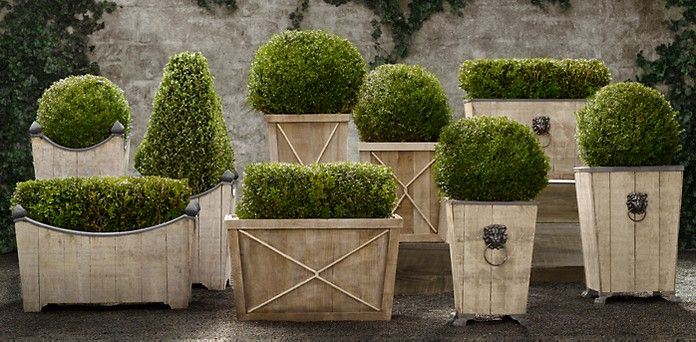 Topiaries | Restoration Hardware