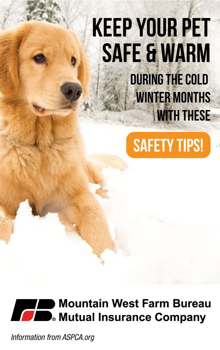 Cold weather safety for your pets with images pets