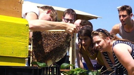 bijenhouden op het dak met imker: de bijenkoing www.bijenkoning.com