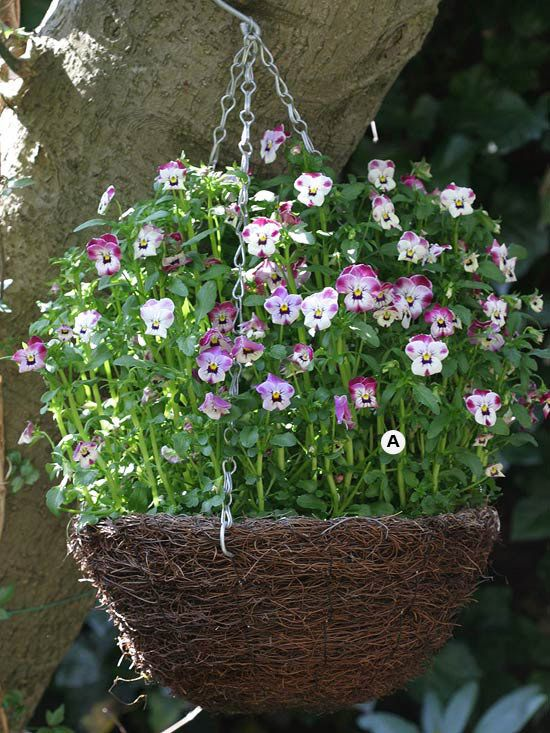 Create Stunning Hanging Baskets - Use these 28 easy plant-by-numbers recipes to put together the most beautiful hanging baskets in your neighborhood.