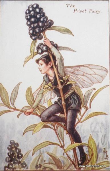 シシリー・メアリー・バーカー - Google 検索