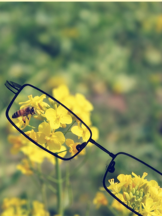 We love nature. It's the inspiration sourse of ozeal glasses.