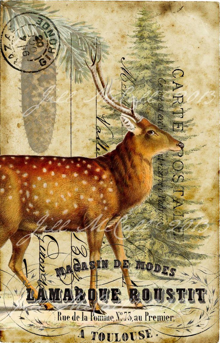 Feathers & Flight ~Jill McCall-Marcott~Mixed Media & Digital Artist: A Bit of Natural History