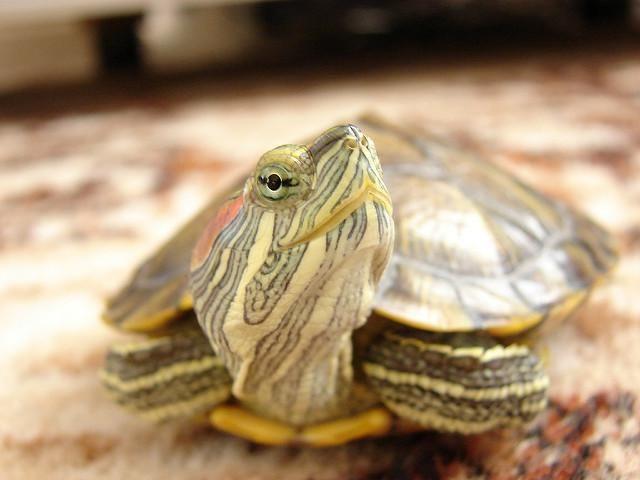 dia de la tortuga 2