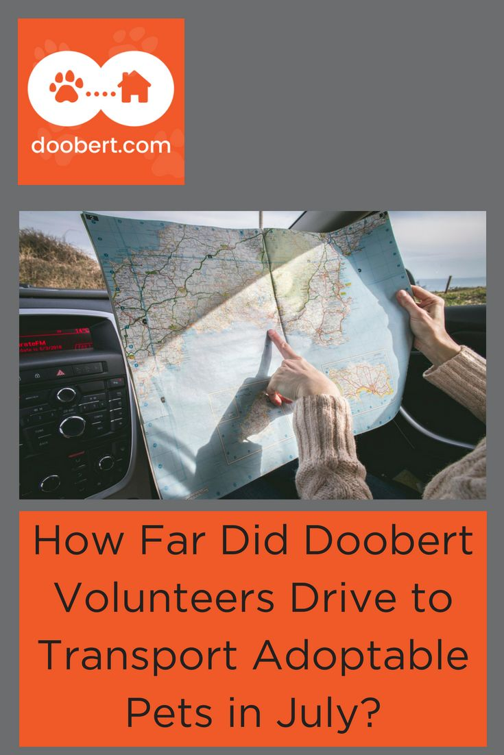 Volunteers Drive Over 38 600 Miles In The Month Of July Animal