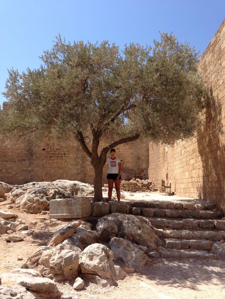Acropolis tree