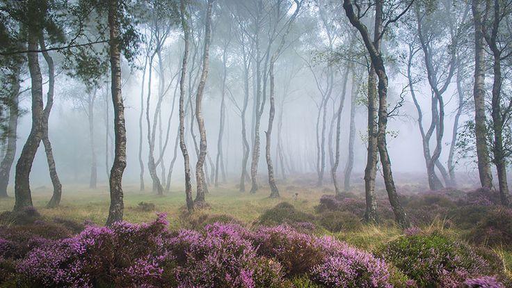 Stanton Moor, dans le Parc national de Peak District, Angleterre - stanton-moor-peak-district-uk