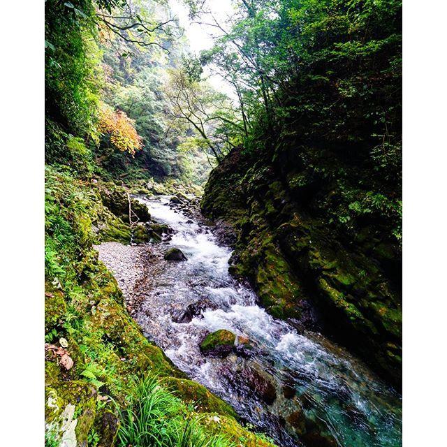 【guutalife8】さんのInstagramをピンしています。 《綺麗‼綺麗すぎる‼  #九州旅行 #九州ふっこう割 #宮崎県#Japan#miyazaki #川#森林#森林浴#癒し#green #river #絶景#日本の絶景#パワースポット #旅好き#findtravel#一人旅#女子一人旅 #カメラ女子#ミラーレス#SONY#天安河原#国内旅行》