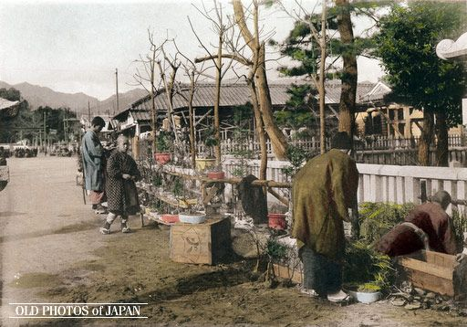 Kobe, 1906.  A housewife shops for a plant during the preparations for New Year. This image is part of The New Year in Japan, a book published by Kobe-based photographer Kozaburo Tamamura in 1906.