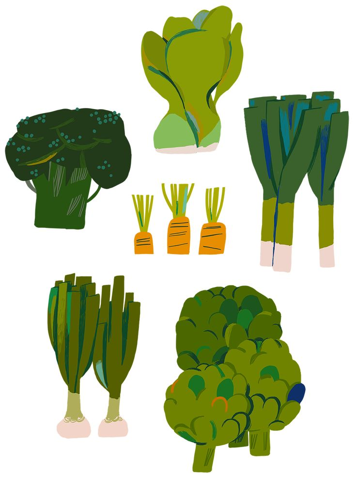 vegetables, green, grow your own, food, cooking, drawing, illustration, design