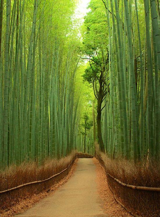 Kitasaga Bamboo Grove (竹林の小径)