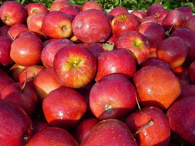 Für die Herstellung von Bio-Apfelessig werden nur die besten Apfelsorten genommen
