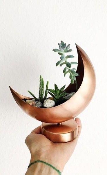 Meia lua vaso plantas