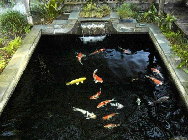 28 Concept Bassin A Poissons Pour La Beaute De Votre Maison Bassin A Poisson Bassin Poisson Exterieur Et Aquaponie