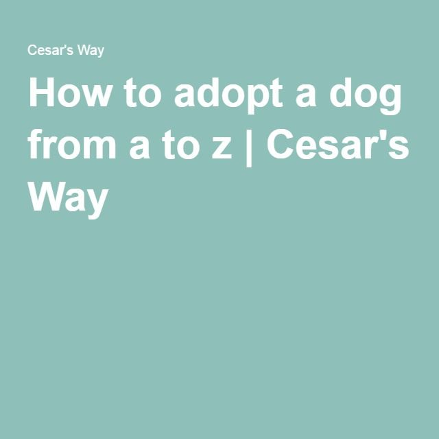 How to adopt a dog from a to z | Cesar's Way