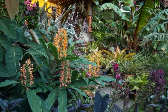Will Giles garden in Norwich, UK | Gardens of a Tropical ...
