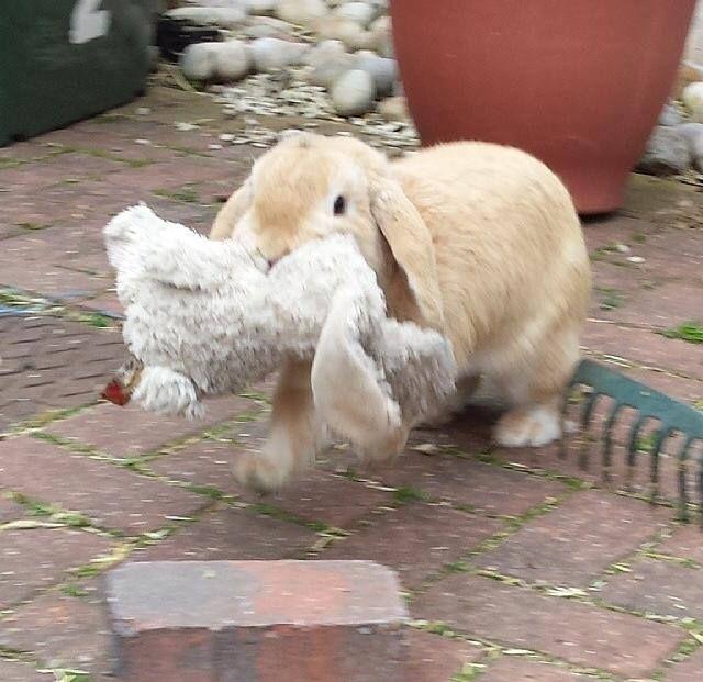 This bunny has a bunny