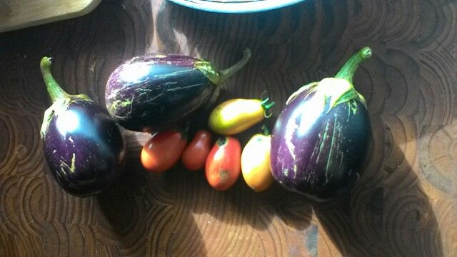 Our homegrown Roma tomatoes and eggplants:-) may 2015