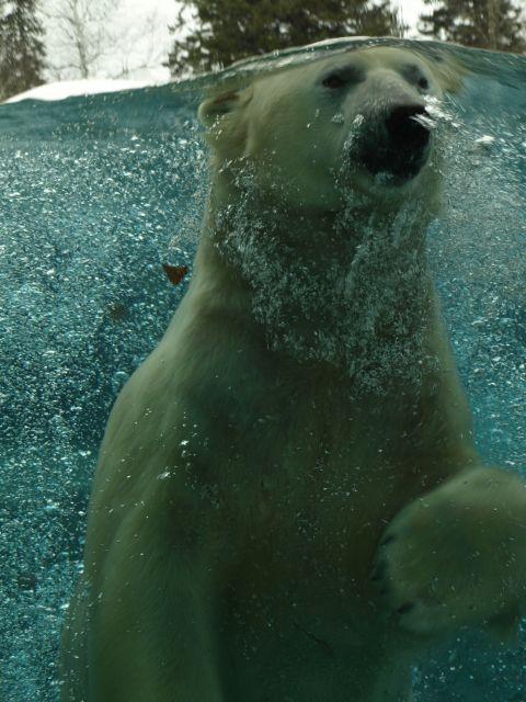 The Facility - Cochrane Polar Bear Habitat