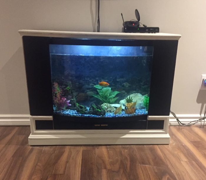 An Old Sears Floor Model Tv- Gutted And Turned Into A Fish Tank Tv Lol !   Bored Panda