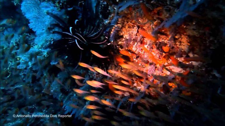 Broken Rock - Ari Sud - © Antonello Porchedda Dive Reporter