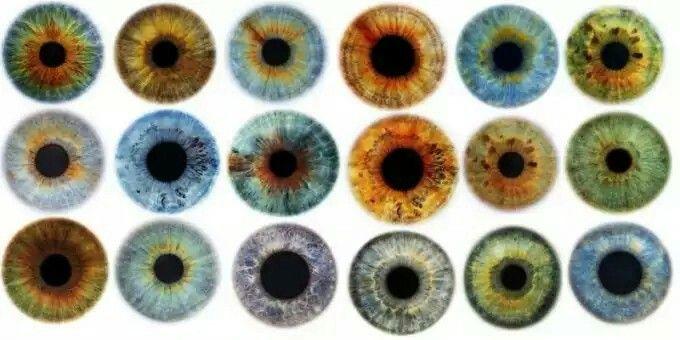 igual que las huellas dactilares, la configuración del iris muestra un patrón complejo y único que se desarrolla en el feto y que, salvo enfermedad o lesión, se mantiene de por vida. De esta forma la biometría puede asegurar tu identidad a partir del escáner de tu globo ocular. Así que puede que estos sean los colores de ojos más raros del mundo pero resulta que, incluso si tus ojos son marrones son únicos.