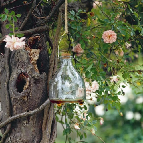 Wasp Trap — Cox & Cox, the difference between house and home.
