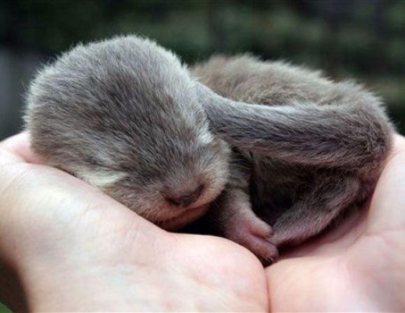 adorable otter pup is sleeping