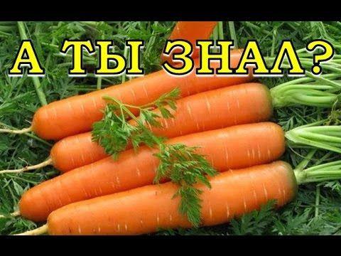Морковные секреты