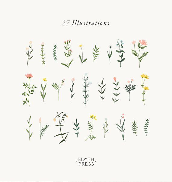 Botanical Clipart Wildflower Hand Drawn Floral Watercolor png flowers clip art illustrations plant flower sprig wedding floral elegant