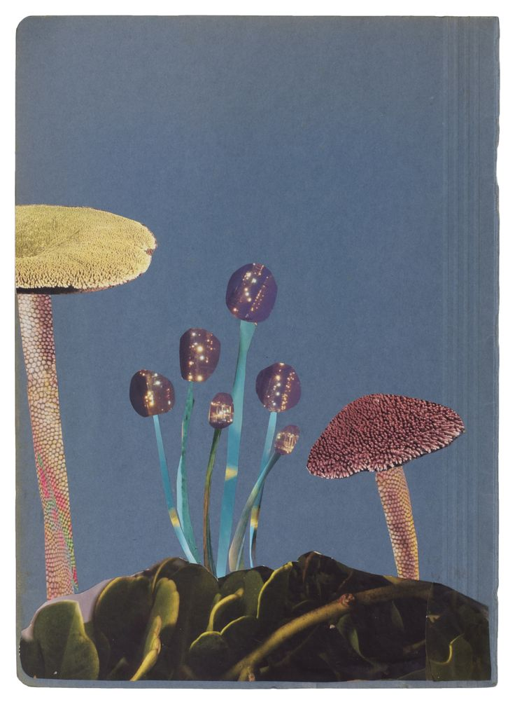 Anke Roder 'Magic Mushrooms' 2015 collage 35 x 25 cm