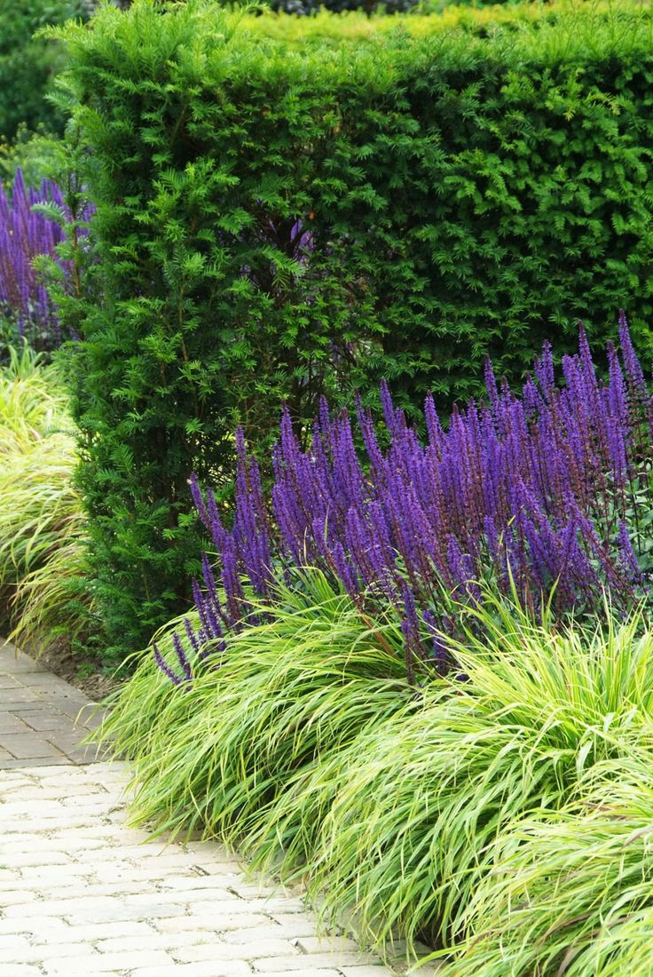 297 best tuin borders images on pinterest garden ideas landscaping and garden plants - Tuin landscaping fotos ...