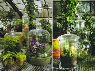 "Carnivorous tropical plants in terrariums--more modern glassware for less Victorian look? (though it pains me to describe anything as needing to be ""less Victorian"")"