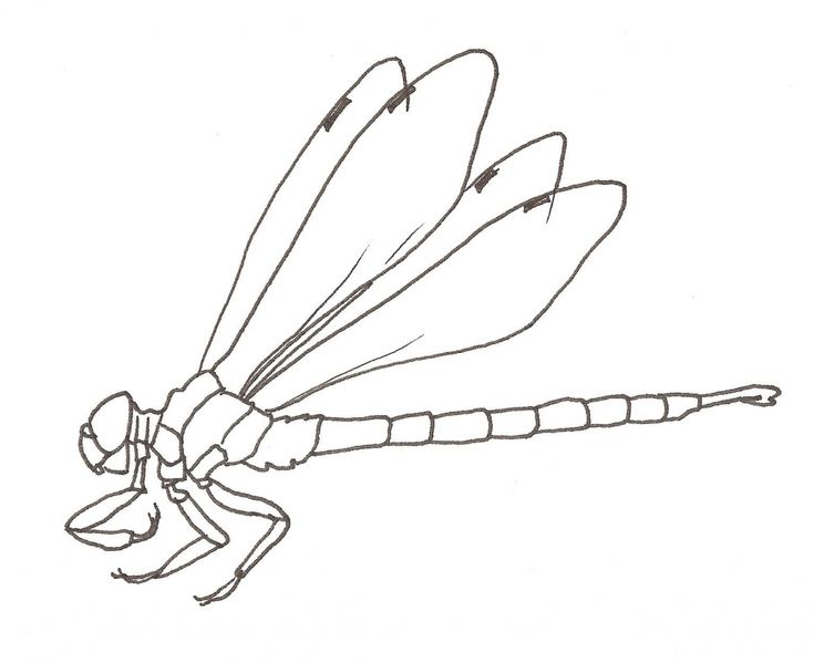Dragonfly Tattoo Line Drawing : Best ideas about dragonfly drawing on pinterest