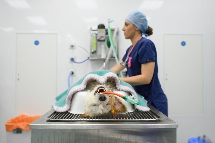 Szpital dla psów i kotów