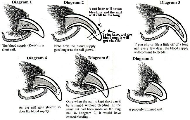 How to trim nails... Comes in super handy :) when trying to explain to client's owners!